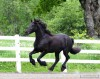 Horse For Sale: Angele- Photo 1